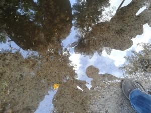 spiegeling in plas, natuurcoaching gebruikt de natuur als spiegel | wandelcoach limburg